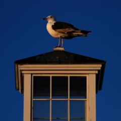 MacMillan Wharf, Provincetown (2011), by David W. Dunlap.