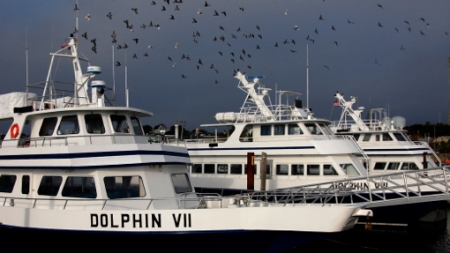 Dolphin VII and Dolphin VIII, Provincetown (2010), by David W. Dunlap.