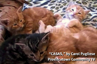 """CASAS,"" by Carol Pugliese. Provincetown Community TV, via Vimeo."