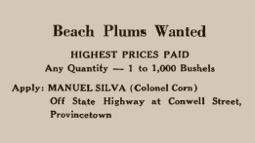 Advertisement in The Provincetown Advocate, 4 September 1947. From Provincetown Online: The Advocate Live!, by the Provincetown Public Library.