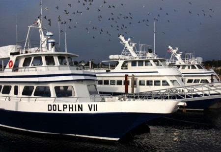Dolphin VII and Dolphin VIII, by David W. Dunlap (2010).